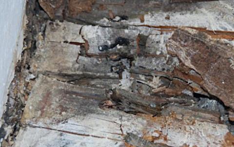 Holzschaden durch Wasser